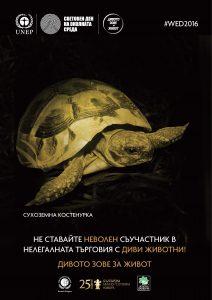 Kostenurka_a3-page-001