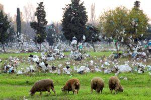 2004-11-SHEEP