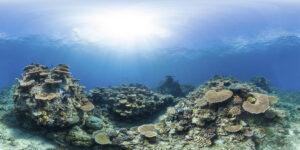 IYORBank_CoralReefs_TheOceanAgency