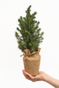 АЕЦ с инициатива за по-зелена Коледа